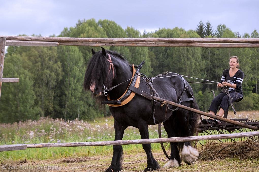 Söderhamn 2016-08-06 Trödje Hästbrukardag