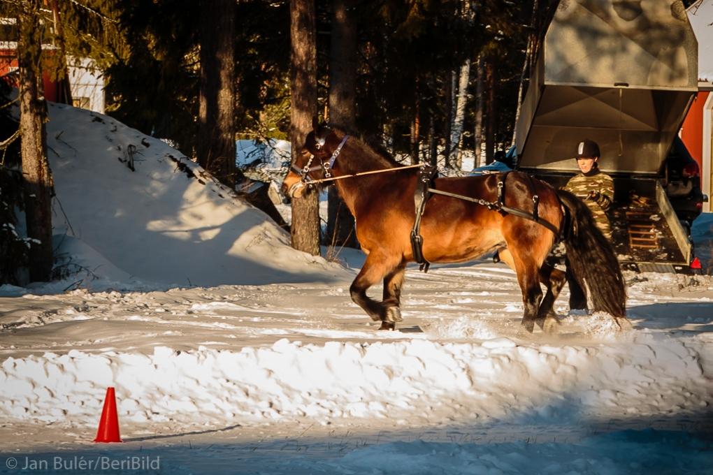 Gävle 2015-01-25 Hemma Tömkörning Hällvinn